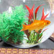 Goldfish in bowl aquarium — Stock Photo