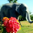 Nature elephant — Stock Photo