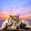 Stock Photo: Tiger looking something on rock with beautiful sky at sunset