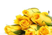 Yellow roses with water drop isolated — Stock Photo
