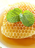 Sweet honeycombs with mint leaf — Stok fotoğraf