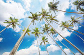 Coconut trees at beach side — Stock Photo