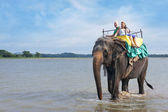 Tourists on an elephant ride tour the on lake Kandalama — Stock Photo