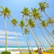 Beach side Sri Lanka  — Foto Stock