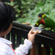 Feeding of birds — Stock Photo #42104825