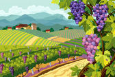 Vineyard and grapes bunches — Stock Vector