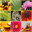 Flowers and insect collage — Stock Photo