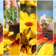 Insect collage — Stock Photo