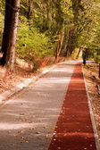 Path in the Forest with Bike stripe — Stock Photo