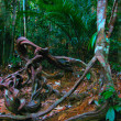 Stock Photo: Jungles