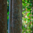 Spider in its web — Stock Photo #34806267
