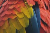 Colorful Macaw Plumage — Stock Photo