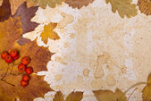 Autumn leaves on textured paper — Stock Photo