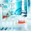 Stock Photo: Cell culture sample
