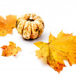 Pumpkin and yellow leaves on white — Stock Photo