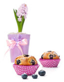 Blueberry muffins and hyacinth on white background — Stock Photo
