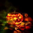 Halloween pumpkin on black background — Stock Photo #33376851
