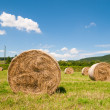 Hay harvest — Stock Photo
