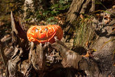 Jack o'Lantern in a forest — Stock Photo