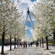 London Eye through white sakura trees — Stock Photo