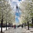 London Eye through white sakura trees — Stock Photo #33380823