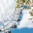 Sakura and London Eye — Stock Photo