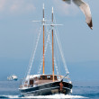 A seagull and a passenger boat at sea — Stock Photo