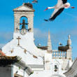 Stock Photo: White storks in Faro, Portugal