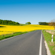 Rapeseed fields alongside a road — Stock Photo
