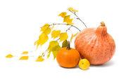 秋季静物 — 图库照片