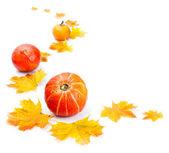 декоративные осенью граница — Стоковое фото