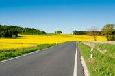Rapeseed fields alongside a road — Stock Photo