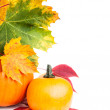 Autumn vertical edge  border — Stock Photo