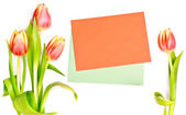 Tulips alongside an orange envelope on white background — Stock Photo