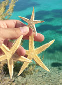 Starfishes in hand — Stock Photo