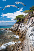 Seagulls by rocky shore in Sithonia, Northern Greece — Stock Photo