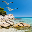 Stock Photo: Seagulls over seshore