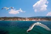 Ouranoupolis,阿索斯山,希腊的海鸥 — 图库照片