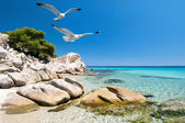 Seagulls over sea shore — Stock Photo