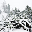 Snowfall in Austrian Alps — Stock Photo
