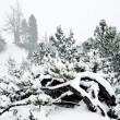 Snowfall in Austrian Alps — Stock Photo