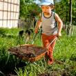 Little farmer with wheelbarrow — Stock Photo
