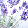 Fragrant bouquet of lavender — Stock Photo #33481663