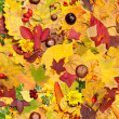 Autumn leaves, seamless background — Stock Photo
