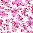Orchids, seamless white background — Stock Photo