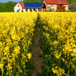 Path in rapeseed to modern farm — Stock Photo