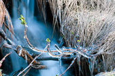 Ice-cold stream — Stock Photo