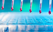 Sample loading with multichannel pipette — Stock Photo