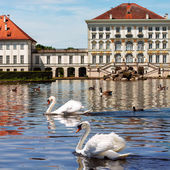 Swans of Nymphenburg castle in Munich — Stock Photo