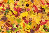 Autumn leaves, seamless background — Stock Photo